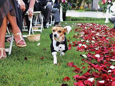 wedding-pet